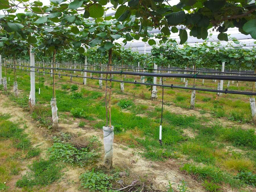 Saracinesche Per Irrigazione Agricola Utilizzo Prodotti