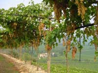 Soluzioni tecnoresine per l 39 irrigazione in agricoltura for Gocciolatori per irrigazione a goccia